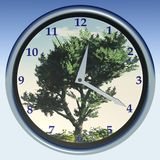 3D analog clock. 3D model of a clock with olive tree as a background Stock Image
