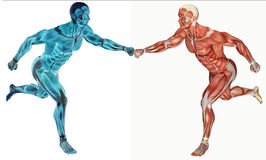3d anatomical man running Royalty Free Stock Image