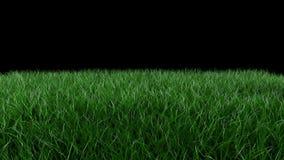 3D animacja, klasyczny piłki nożnej piłki kołysanie się przez zielenieje pole royalty ilustracja