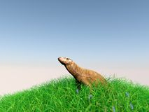 3d animal in the meadow. 3d rendering of animal on grass with back light with high quality render Stock Image