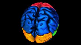 3d animation of the various colored parts of the brain - Parietal lobe