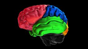 3d animation of the various colored parts of the brain - Temporal lobe