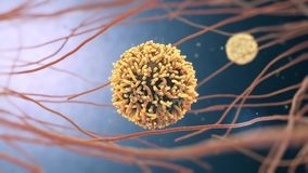 3d animation of white blood cells