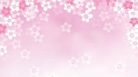 2D animazione dei fiori di caduta del ciliegio Primavera, concetto di Pasqua Metraggio di Loopable HD video d archivio
