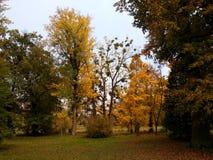 ` D'arbres d'automne de ` Image stock