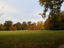 ` D'arbres d'automne de ` Images libres de droits