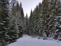` D'arbres et de neige de ` Photographie stock