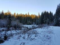 ` D'arbres et de neige de ` Photos stock