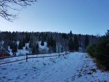 ` D'arbres et de neige de ` Images stock