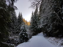 ` D'arbres et de neige de ` Photo libre de droits
