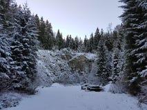 ` D'arbres et de neige de ` Image libre de droits