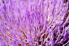 D'artichaut de fleur fin vers le haut Photo stock