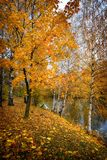 Or d'automne photo stock