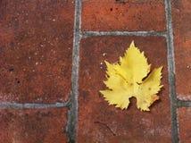 D'automne de Feuille Photographie stock libre de droits