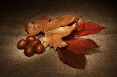 D'automne toujours durée Images stock
