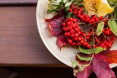 D'automne toujours durée Sorbe, viburnum, pommes Fruits et baies d'un plat en bois Fond des lames d'automne Rouge photographie stock