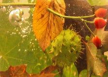 D'automne toujours la châtaigne, la bruyère et les feuilles de la vie se sont laissées tomber dans l'eau Photo stock