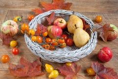 D'automne toujours la vie avec de divers cadeaux de nature Après moisson Images stock