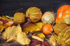 D'automne toujours la vie avec des potirons et des feuilles sur le vieux backgro en bois Photographie stock libre de droits