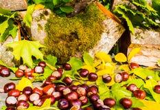 D'automne toujours la vie des châtaignes et des feuilles image stock