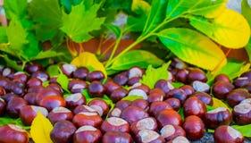 D'automne toujours la vie des châtaignes et des feuilles images libres de droits