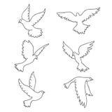 D'autres colombes Graphismes de vecteur Photos stock