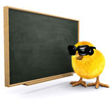 3d Baby chick at the blackboard. 3d render of a baby chick stood next to a chalkboard Royalty Free Stock Photo