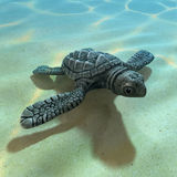 3d Baby sea turle Royalty Free Stock Images