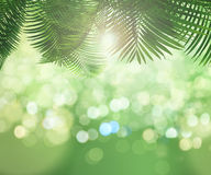 3D background of leaves on bokeh light background. 3D render of sunlight shining through leaves on a bokeh light background Stock Photography