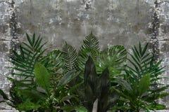 3d behang, bladeren van houseplants op concrete muur geweven achtergrond stock afbeeldingen