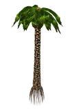 3D Bjuvia simplex voorhistorische boom - geef terug stock illustratie