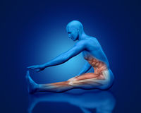 3D blue medical figure in stretching pose. 3D blue male medical figure with partial muscle map in stretching pose Royalty Free Stock Photography