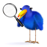 3d Bluebird with magnifying glass Stock Photography