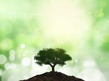 3D boom op een hoop van grond tegen een bokehachtergrond Stock Fotografie