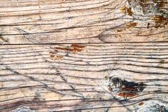 Dębowego drewna tekstura Fotografia Stock