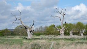 D?bowego drzewa driady w antycznym os?upia?ym lasowym dniu w Angielskiej wsi na chmurnym dniu 4 zdjęcia stock