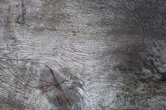 Dębowego drzewa tekstura Obraz Royalty Free