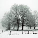 dębowego drzewa zima drewno Zdjęcie Stock