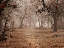 Dębowi drzewa w zimy mgle Obraz Stock