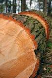 dębowy drewno Zdjęcia Royalty Free