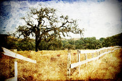dębowy drzewo Fotografia Royalty Free