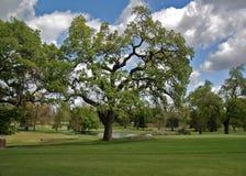 Dębowy drzewo jeziorem Zdjęcia Stock