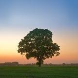 Dębowy drzewo przy zmierzchem zdjęcie stock