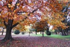 Dębowy drzewo w automn Fotografia Royalty Free