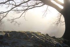 Dębowy drzewo w wsi w zimie Fotografia Stock