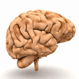 3D brain. A 3D design of a human brain isolated on white background Stock Photography