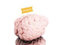 3d Brain with a signboard and word hangover. 3D Illustration. Brain with a signboard and word hangover. Isolated white background Royalty Free Stock Photos