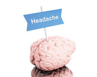 3d Brain with a signboard and word headache. 3D Illustration. Brain with a signboard and word headache. Isolated white background Royalty Free Stock Image