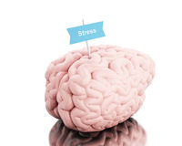 3d Brain with a signboard and word stress. 3D Illustration. Brain with a signboard and word stress. Isolated white background Royalty Free Stock Photo