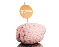 3d Brain with a signboard and word stress. 3D Illustration. Brain with a signboard and word stress. Isolated white background Stock Photography